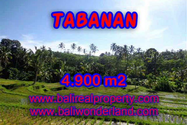 Unbelievable Property for sale in Bali, land for sale in Tabanan Bali  – 4.900 m2 @ $ 42