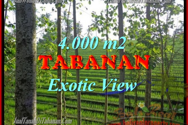Amazing Property in Bali, LAND FOR SALE IN TABANAN Bali – 4.000 m2 @ $ 40