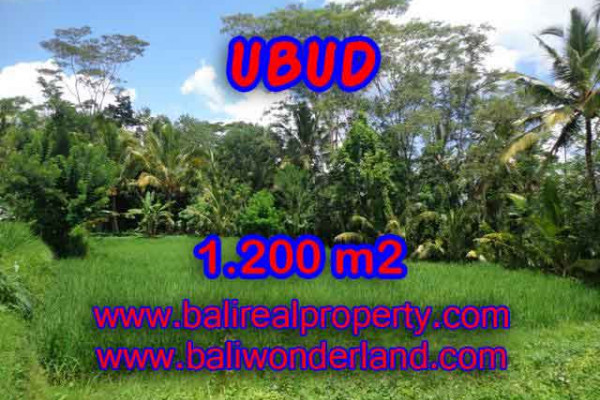 Land for sale in Ubud Bali, Great view in Ubud Payangan – TJUB404