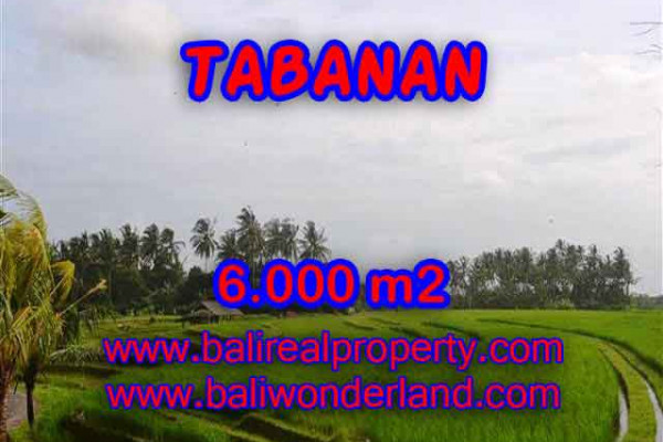 Attractive Property for sale in Bali, Tabanan land for sale – 6.000 m2 @ $ 36