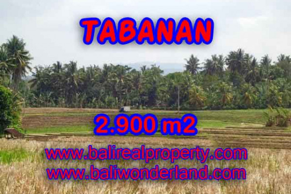 Land for sale in Bali, Outstanding view in Tabanan Bali – 2.900 m2 @ $ 47