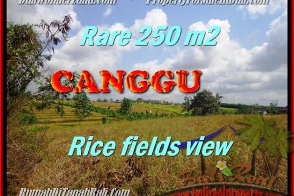 CANGGU BALI LAND FOR SALE TJCG164