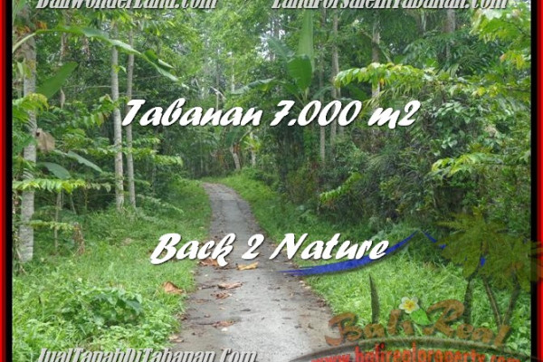 Magnificent LAND SALE IN Tabanan Penebel BALI TJTB176