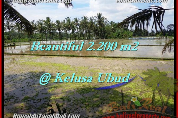 Magnificent 2,200 m2 LAND FOR SALE IN UBUD BALI TJUB475