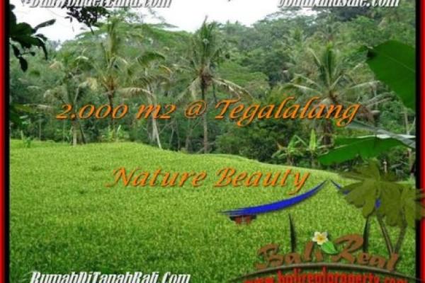 Beautiful LAND SALE IN Ubud Tegalalang BALI TJUB490