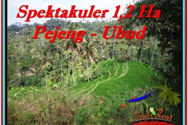 FOR SALE Exotic PROPERTY 12,000 m2 LAND IN UBUD BALI TJUB520