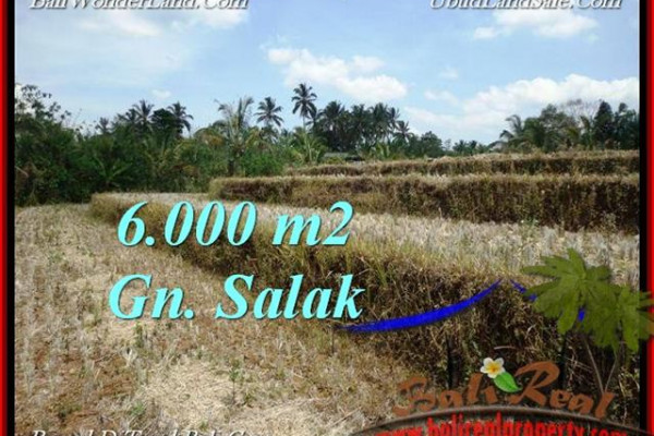 Affordable LAND SALE IN Tabanan Selemadeg BALI TJTB221
