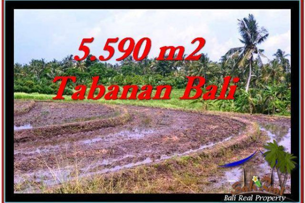 Beautiful LAND FOR SALE IN TABANAN TJTB257