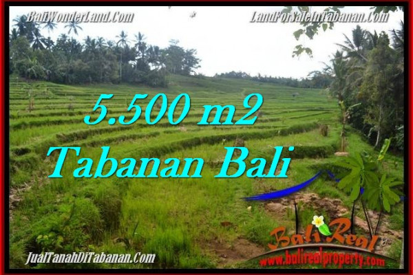 Affordable 5,500 m2 LAND IN TABANAN BALI FOR SALE TJTB280