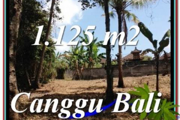 Exotic 1,125 m2 LAND IN CANGGU FOR SALE TJCG208