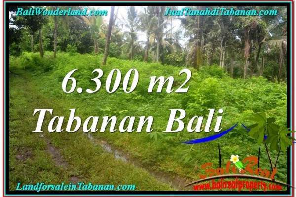 Magnificent LAND IN Tabanan Selemadeg BALI FOR SALE TJTB313