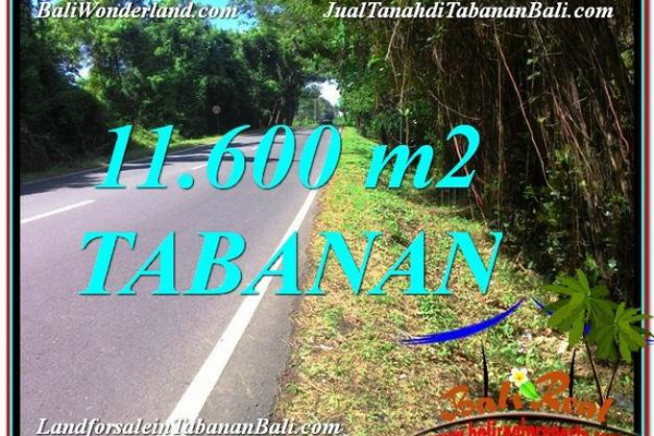 Beautiful PROPERTY 11,600 m2 LAND IN Tabanan Selemadeg BALI FOR SALE TJTB327