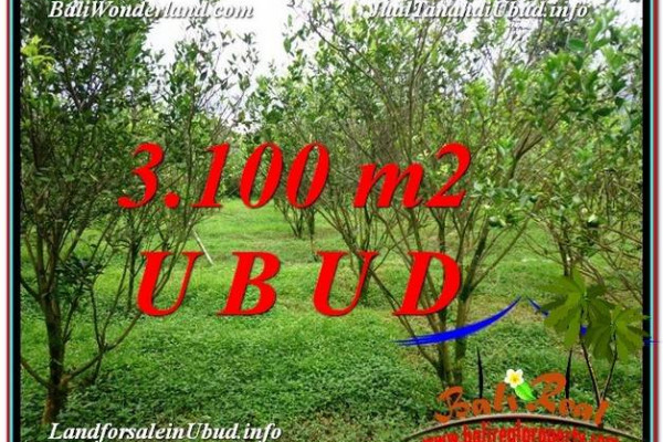 FOR SALE Exotic 3,100 m2 LAND IN UBUD BALI TJUB593