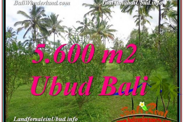 Affordable PROPERTY 5,600 m2 LAND FOR SALE IN Ubud Tegalalang TJUB609