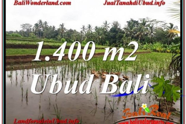 Beautiful PROPERTY 1,400 m2 LAND SALE IN Ubud Payangan TJUB615