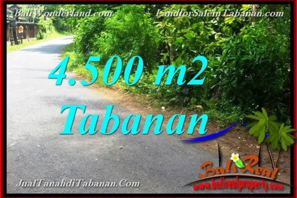 Exotic PROPERTY 4,500 m2 LAND FOR SALE IN TABANAN Selemadeg BALI TJTB380