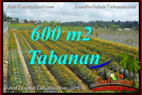 Magnificent PROPERTY LAND IN Tabanan Bedugul BALI FOR SALE TJTB372