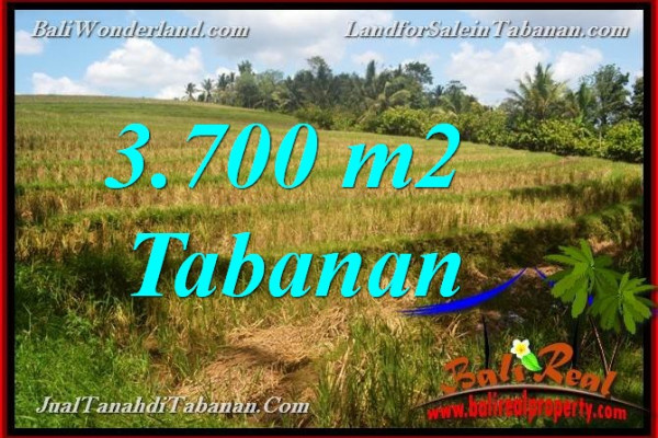 FOR SALE Exotic PROPERTY LAND IN Tabanan Selemadeg TJTB377