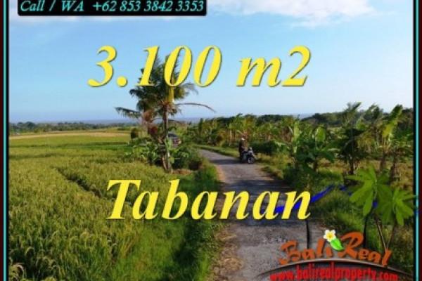 FOR SALE Affordable PROPERTY 3,100 m2 LAND IN SELEMADEG TABANAN BALI TJTB496