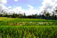 LAND IN Ubud, 27 ARES IN KELUSA, Tegalalang @ Rp 57 Mill / m2 – TJUB027