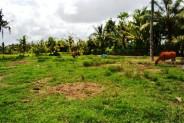 Land in Ubud, Nyuh Kuning 180 ares @ Rp 115 million / are ( 100 m2 ) – TJUB057