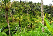 Land in Ubud, 228 ares in Calo Tegalalang @ Rp 33 mill / are ( 100 m2 ) – TJUB060