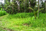Land in Ubud, 46 ares in Pejeng – TJUB096
