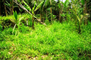 Land in Ubud Payangan view of paddy fields and on river side – TJUB071