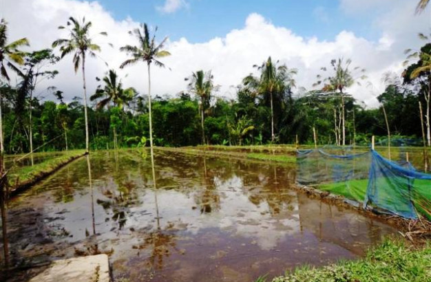 land for sale in Ubud with rice field view – TJUB101