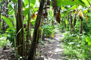 Land For Sale in Ubud Suitable for Villa in Sayan – TJUB040