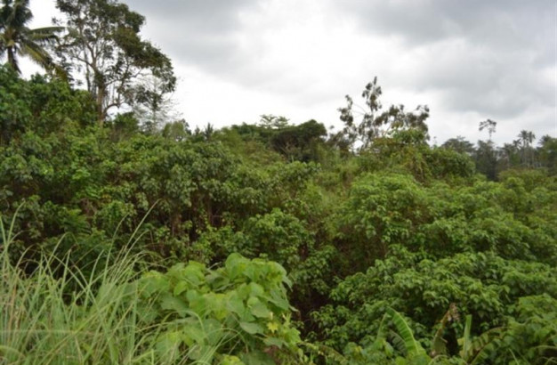 Land For Sale in Ubud with view rice fields – TJUB009