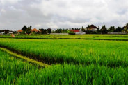 Land for Sale in Ubud 75 are in Lotunduh Bali – TJUB036
