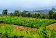 LAND FOR SALE IN BEDUGUL, BALI. BEAUTIFUL LAKE VIEW, GREAT PRICE – TJBE001