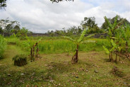 roadside freehold land for sale in Bedugul – TJBE008