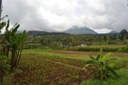 land for sale in Bedugul near baturiti traditional market – TJBE010