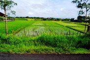 land for sale in Canggu near to the beach  – TJCG015