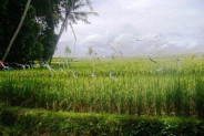 Land for sale in Canggu suitable for villa – TJCG026