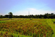 rice paddys view land for sale in Canggu – TJCG035