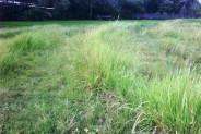 Land for sale in canggu Kayu Tulang – TJCG039