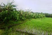 land for sale in canggu – TJCG042