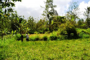 stunning view land for sale in Tabanan – TJTB010
