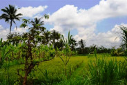 Land for sale in Ubud with river valley view – TJUB014