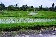 land for sale in Ubud near of ubud market – TJUB052