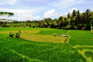 Land for sale in Ubud 5 – 35are  suitable for villa – TJUB054
