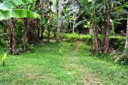 land for sale in Ubud Bali, 35 are suitable for villa – TJUB055