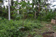 land for sale in Ubud 45 are with river view – TJUB058