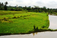 Land for sale in Ubud Sanggingan 30 ares close to Museum Neka