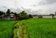 land for sale in Ubud 30 are with rice field view – TJUB063
