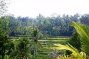land for sale in Ubud Bali nice rice fields view – TJUB080