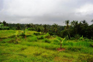 Land for sale near Central Ubud Great for Villa – TJUB083